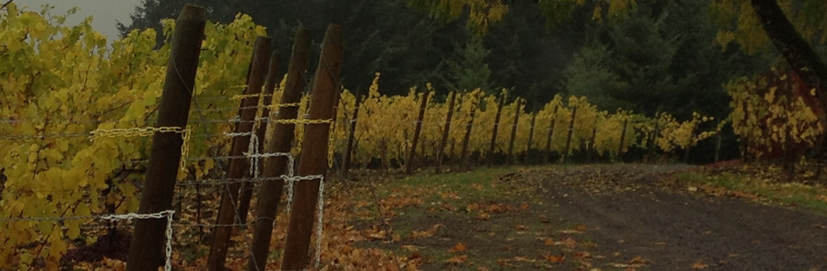 The leaves on the vines at Styring in Newberg, Oregon, turn shades of gold in autumn.
