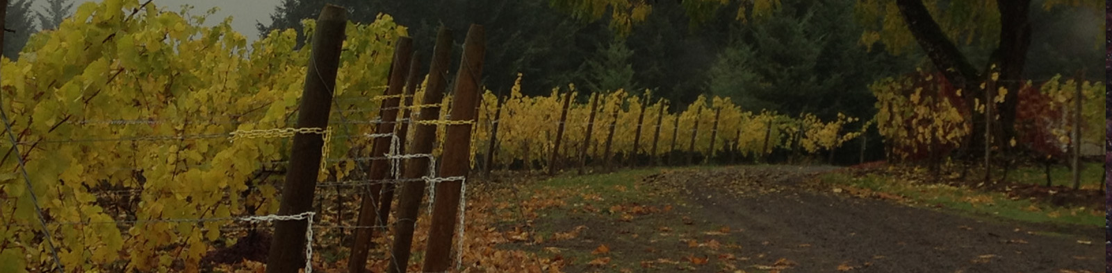 Autumn in the vineyard at Styring in Newberg, Oregon