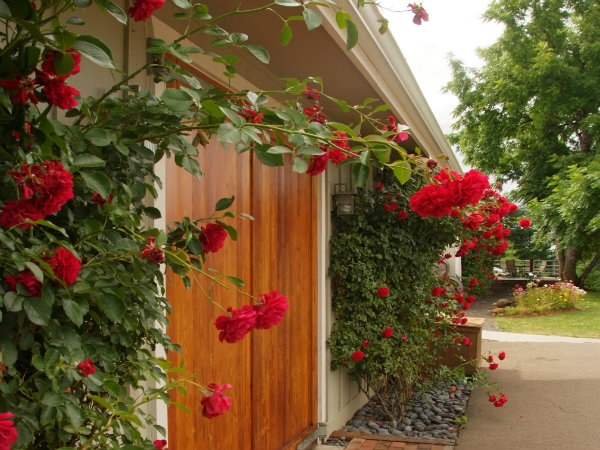 Entrance to Styring winery tasting room surrounded by climbing vines of red roses